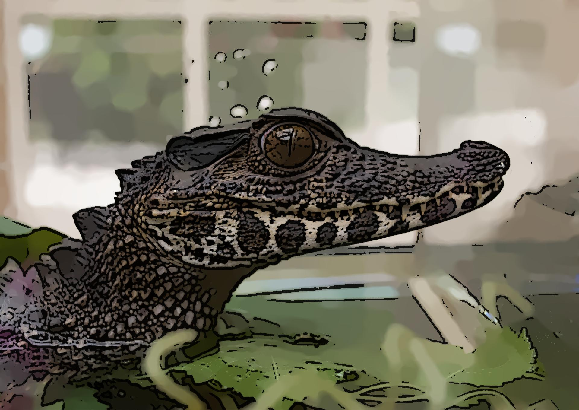 alligator_cartoonized